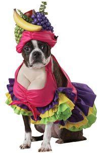 Cha Cha Cha! Dog Costume - Dog Costumes
