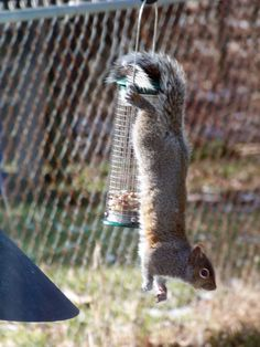 Funny Squirrel Feeders For Your Yard