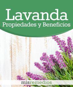 #Lavanda - Propiedades y Beneficios #PlantasMedicinales