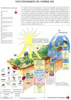 Le Fonctionnement du système sol