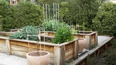 1000 images about wa coastal garden ideas on pinterest bali garden