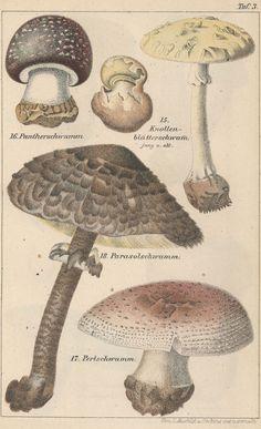 Harvard University Herbaria - Botany Libraries Archives