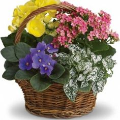 Flower delivery by local florists, order flowers online to send a thoughtful gift. Teleflora bouquets are hand arranged and available for same-day delivery. Send fresh flowers online or by phone for a great deal. Get Well Flowers, Flowers For You, Fresh Flowers, Spring Flowers, Send Flowers, Beautiful Flowers, Wedding Flowers, Garden Basket, Plant Basket
