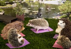 I work in the TV and film industry, so I wanted to take a cinematic approach to photographing my pet hedgehog. I use backdrops, create sets and props and use lighting to capture Humphrey as if he were in a movie scene. Happy Hedgehog, Hedgehog Pet, Cute Hedgehog, Hamsters, Cute Baby Animals, Funny Animals, All Things Cute, Funny Cat Videos, Bored Panda