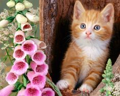 7 Best Cute Wallpapers Images Cute Kittens Cute Wallpapers Dog Cat