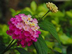 Flores 2 | por osoriotrujillo