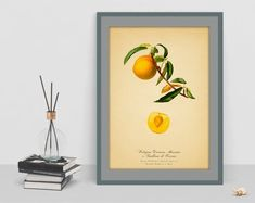 Watercolour vintage art print of Peach Botanical wall art poster picture antique home print living room decor cubicle decor drawing wall art Vintage Art Prints, Botanical Wall Art, Poster Pictures, Cubicle, Geometric Art, Picture Wall, Wall Art Decor, Watercolour, Living Room Decor