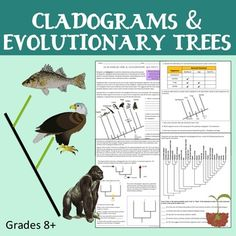 how does a cladogram reveal evolutionary relationships diagram students and characters. Black Bedroom Furniture Sets. Home Design Ideas
