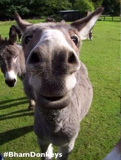 Good Morning.  Cloudy in the middle.  Have a #TerrificTuesday from therapy donkey Lob http://www.thedonkeysanctuary.org.uk/donkey-assisted-therapy…