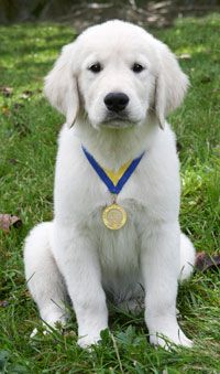 S.T.A.R. Puppy is a program that the AKC offers to help you and your puppy get off to a great start and have fun while doing it!