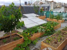 jardinage hors sol sur les toits Rooftop Design, Eco City, Event Room, Bike Shed, Veg Garden, Rooftop Terrace, Urban Farming, Green Life, Garden Inspiration