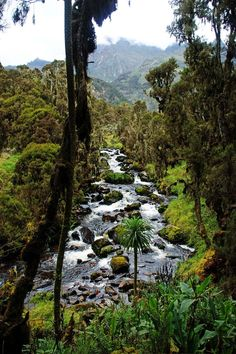 Rwenzori Mountains: tough trekking in Scenic Paradise