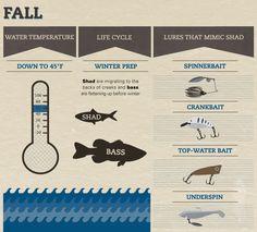 Seasonal Bass Baiting - Guide to Bass Fishing in Fall Bass Fishing Tips, Fishing Knots, Gone Fishing, Best Fishing, Trout Fishing, Kayak Fishing, Fishing Tricks, Fishing Basics, Carp Fishing