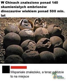 Polish Memes, Zero Two, I Cant Even, Best Memes, Sentences, Haha, Beautiful Pictures, Humor, Life