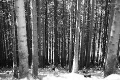 Woods, Goslar 2015