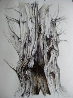 Arbre enchanté Biro The Effective Pictures We Offer You About dessin croquis animal A quality pictur Gravure Illustration, Tree Illustration, Tree Sketches, Drawing Sketches, Tree Drawings Pencil, Enchanted Tree, Nature Drawing, Tree Roots, Biro