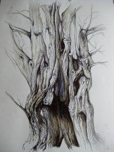 Biro enchanted tree