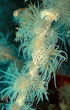 Ocean Creatures!!