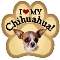 I love my chihuahua's!