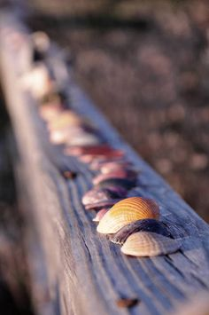 """Sea Shells"" by AndrewBathurst"