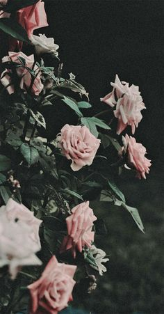 iphone wallpaper green shallow focus photography of red roses photo Free Flower Image on Unsplash Iphone Wallpaper Green, Beste Iphone Wallpaper, Iphone Wallpaper Images, Dark Wallpaper, Trendy Wallpaper, Wallpaper Pictures, Iphone Wallpapers, Blush Pink Wallpaper, Spring Aesthetic