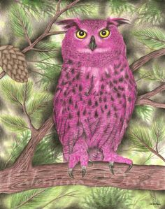 Pink Owl Great artwork drawing $99 - $149 size preference click website Artwork Drawings, Pink Owl, Valentino, Bird, Abstract, Illustration, Animals, Summary, Animales