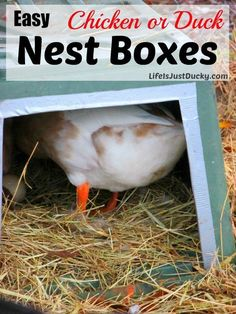 How to make nest boxes for your chickens or ducks. Easy to make and the results are cleaner eggs.