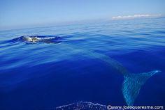 fin whale byquarrresma / João Quaresma