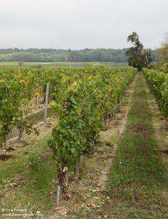 Loire Valley Wine, Vineyard, Outdoor, Outdoors, Vine Yard, Vineyard Vines, Outdoor Games, The Great Outdoors