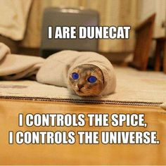 Dune cat, Star Trek cat and many others.