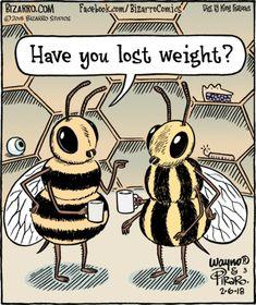 Bizarro: Have you lost weight? Cartoon Jokes, Funny Cartoons, Funny Puns, Hilarious, Funny Stuff, Funny Animal Pictures, Funny Animals, Bee Puns, Bizarro Comic