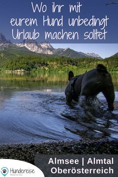Urlaub mit Hund im Almtal, Oberösterreich Travel report about Almsee, Großer & Kleiner Ödsee and the Almfluss in the Almtal in Upper Austria. Backpacking Boots, Camping And Hiking, Outdoor Camping, Camping Site, Travel Report, Hiking Routes, Dog Travel, Best Investments, Trekking