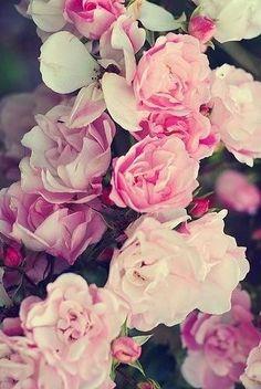 Roses♡