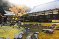 円覚寺 ~鎌倉の紅葉 Autumn leaves in Engakuji Temple,Kamakura,Japan