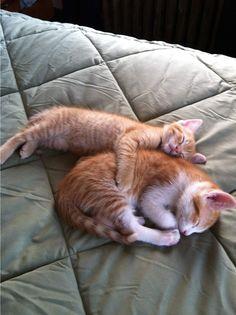 Funny cats - part 249 (40 pics + 10 gifs)