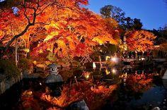 kamakura#鎌倉#長谷寺#紅葉