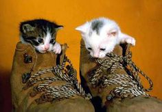 Shoes too big or cat too small?