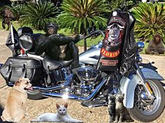 Harley 2015 Heritage Softail