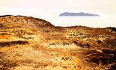 See that nice yellow color under all the penguins? It looks so pretty doesn't it? Well, this is actually the color when you mix together penguin feathers and projectile poop.  Most of Antarctica had no smells at all… I think the whole continent saved all the smells for this place.