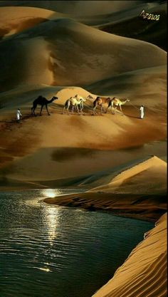 Camels in the sand dunes. I'm not sure if this is in Australia or not, so I'll pin it in the Nature one just in case Cool Pictures, Cool Photos, Beautiful Pictures, Beautiful World, Beautiful Places, Landscape Photography, Nature Photography, Deserts Of The World, Desert Life