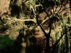 Neu in meiner Galerie bei OhMyPrints: Mystischer Wald
