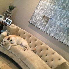 @armissagia's dog looks like he's loving his nap on our Circa Sofa.