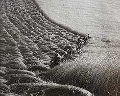 Ernö Vadas, Harvest, 1937