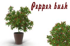 Pepper bush by AndrewWhite on Creative Market