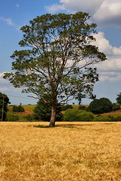 One Tree, One Field #nature #photography