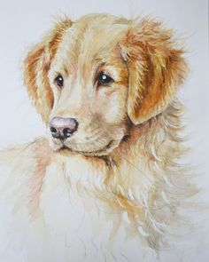 "Saatchi Art is pleased to offer the Art Print, ""Golden Retriever,"" by Alison Brodie. Archival inks on N/A. Size is undefined H x undefined W in. Amazing Paintings, Dog Paintings, Golden Retriever Kunst, English Golden Retrievers, Puppy Drawing, Dog Portraits, Painting Portraits, Retriever Dog, Best Dogs"