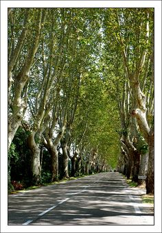 Saint-Remy-de-Provence.
