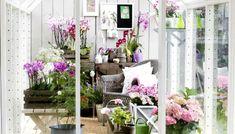 Home & Decor Outdoor Projects, Outdoor Decor, Rooftop Terrace, Good House, Green Garden, Garden Inspiration, Ladder Decor, Home And Garden, Instagram