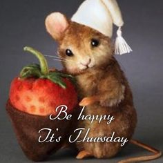 Be Happy It's Thursday thursday thursday quotes happy thursday thursday quote happy thursday quote cute thursday quotes Happy Thursday Pictures, Happy Thursday Morning, Happy Thursday Quotes, Funny Good Morning Messages, Cute Good Morning Quotes, Good Thursday, Good Morning Good Night, Good Morning Wishes, Greetings For The Day