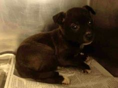 313424 Connie.  Tiny baby San Antonio urgent which is awful bc she's a baby.
